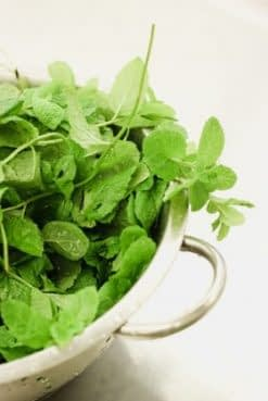 Herbs for your best life